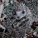 Hedgehog Sleeping by samcannonart