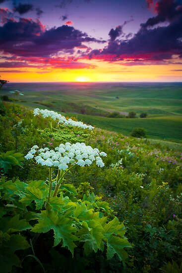 Palouse Flowers by Inge Johnsson
