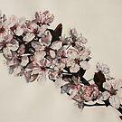 Cherry Blossom at Griddleshay by samcannonart