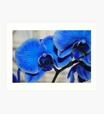 Bright Blue Orchids Art Print
