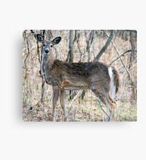 Doe, A Deer, A Female Deer... Metal Print