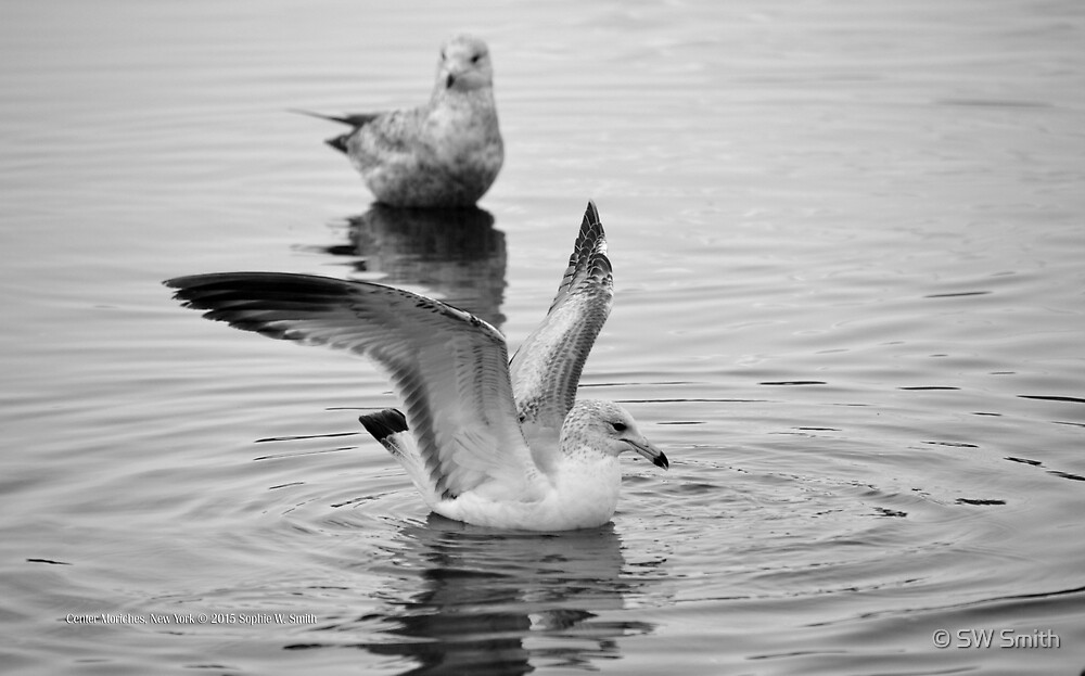 Seagull's Wings | Center Moriches, New York  by © Sophie W. Smith