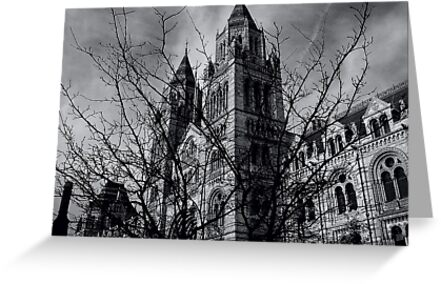 Natural History Museum by Chris Cardwell