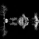 Reflections in Black and White by TeresaB