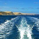 Fleurieu Peninsula coast, South Australia by John Mitchell