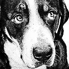 The Ultimate Dog Lovers Calendar! by Marcia Rubin