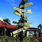 Dole Pineapple Plantation by Kahlia Huddleston