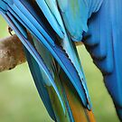 Tail feather! by Fiona Gardner