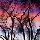 Colorful Silhouetted Trees 9 by Bo Insogna