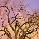 Pastel Cottonwood Sky by Bo Insogna