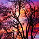 Colorful Silhouetted Trees 12 by Bo Insogna