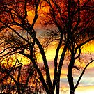Colorful Silhouetted Trees 15 by Bo Insogna