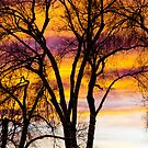 Colorful Silhouetted Trees 19 by Bo Insogna