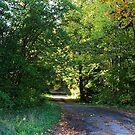 The Road 24 by Cripplefinger