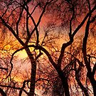 Colorful Silhouetted Trees 22 by Bo Insogna