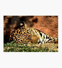 Tiger Cat Photographic Print