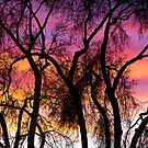 Colorful Silhouetted Trees 27 by Bo Insogna
