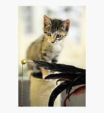 Playing Kitten Photographic Print
