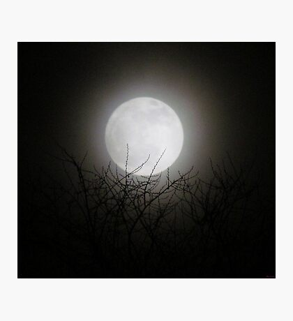 1st Full Moon of The new Year~!!!!!! Photographic Print