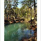 Nature's View Calendar by Shawnuffdigital