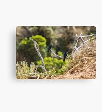 Two welcome swallows perched on a branch Canvas Print