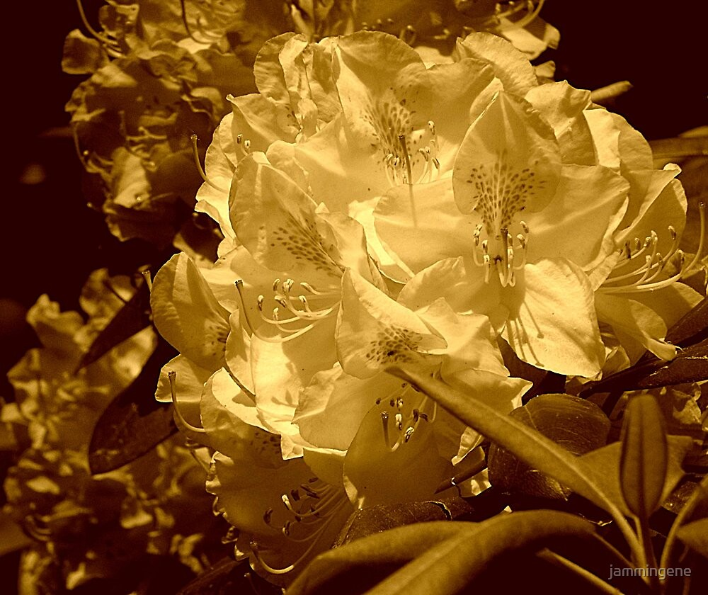 Flowers in a sepia view....Behind the wall of sleep by jammingene