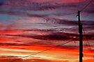 ~ suburban sunset ~ by Adriana Glackin