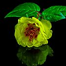 Yellow Rose by Tom Newman