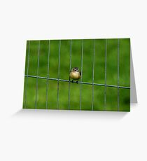 Prison Break Greeting Card