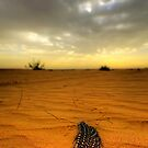 Desert Feather by Luke Griffin