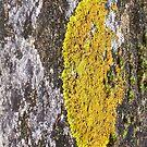 lichen by JuliaJay