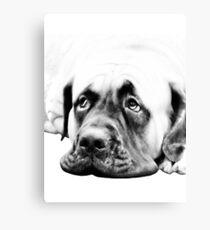 Bull Mastiff Canvas Print