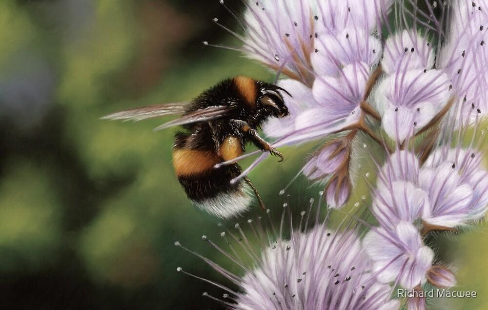 Bumblebee by Richard Macwee