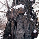 Old tree in the snow by Shulie1