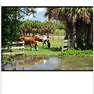 Horses by Shawnuffdigital