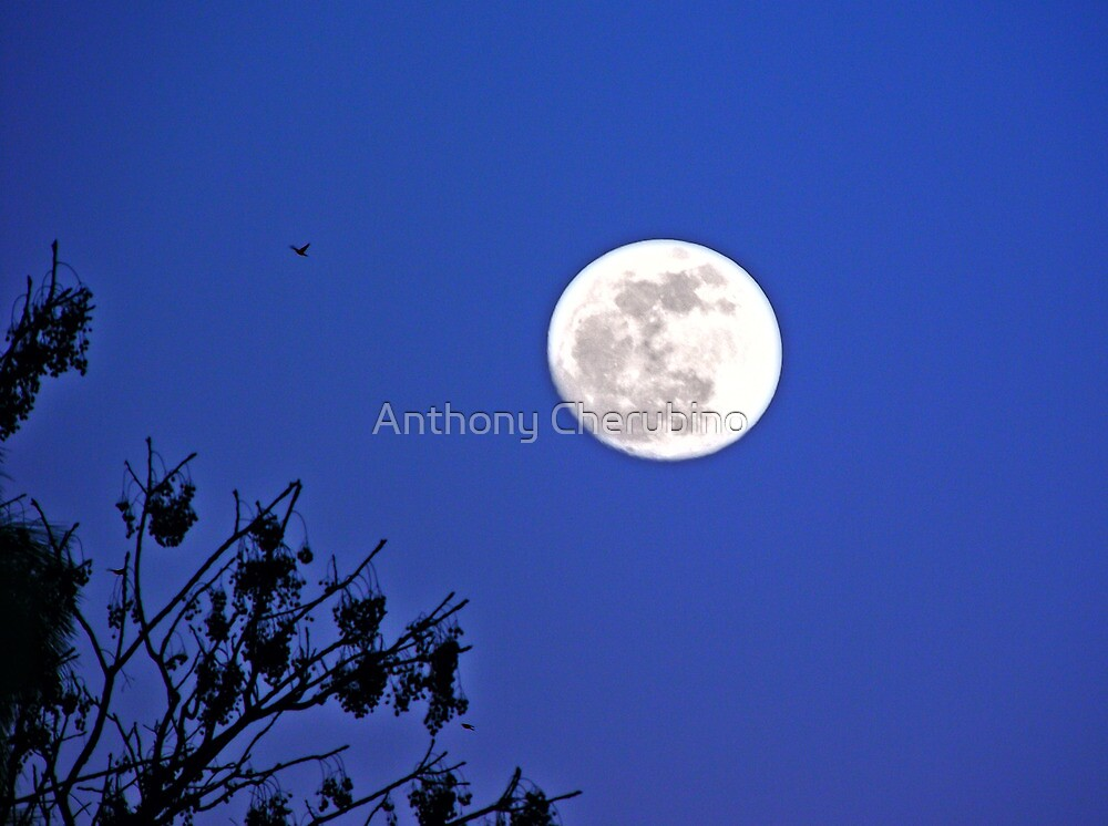 """Moon Over Mariner"" by Anthony Cherubino"