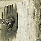 Woodwork.... by BreeDanielle