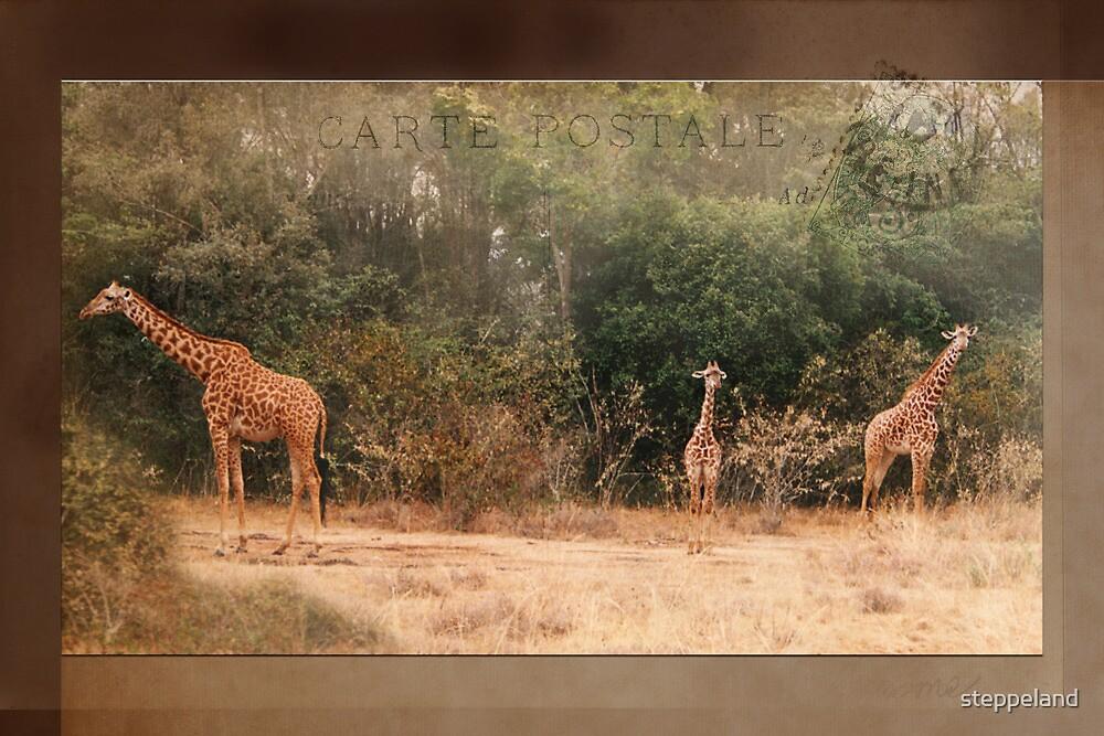 Giraffes ~ Carte Postale by steppeland