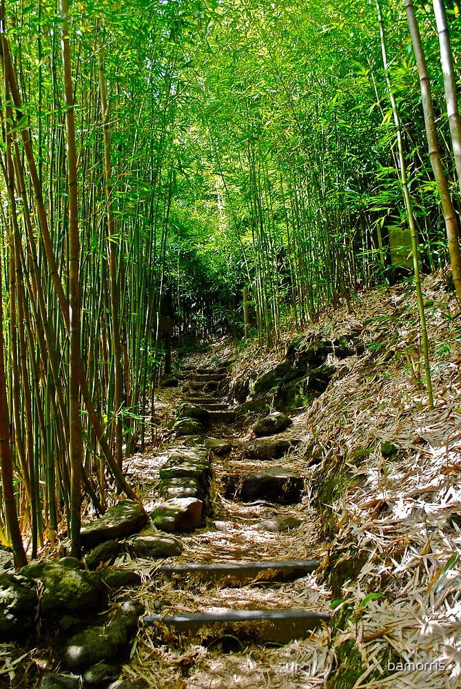 Jungle Trail by bamorris