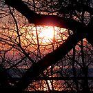 A New Day Dawning © by Dawn Becker