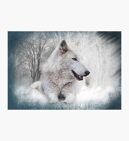 White Wolf Photographic Print