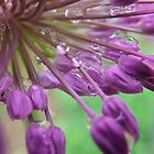 Inside An Ornamental Onion In The Rain by Tracy Wazny