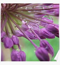 Inside An Ornamental Onion In The Rain Poster