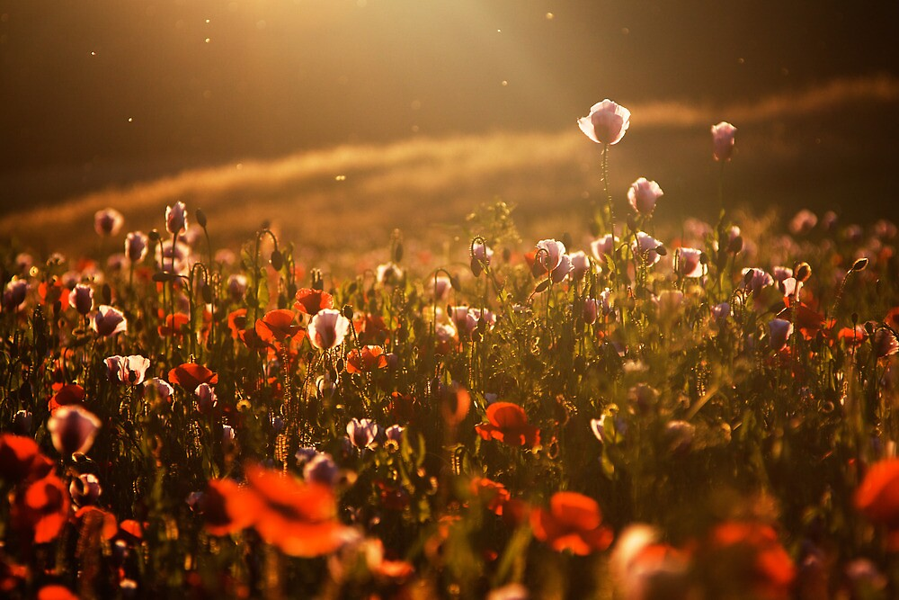 Summer Light by Martin Rak