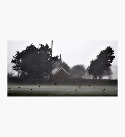 Un anchored Birds Photographic Print