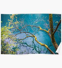 Amazing colors of mossy tree and deep lake at Jiuzhaigou Valley National Park Poster