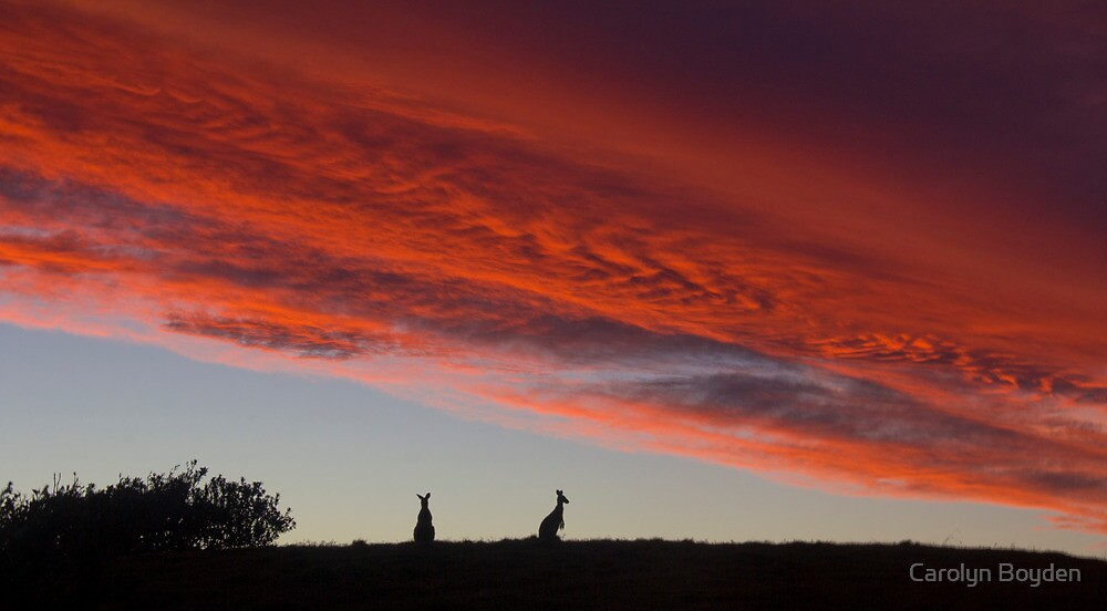 Sunset Silhouettes  by Carolyn Boyden