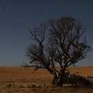 Night Tree by Gavin Kerslake