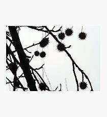 Gumballs Photographic Print