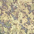 Autumn Colors by Amit  Gairola